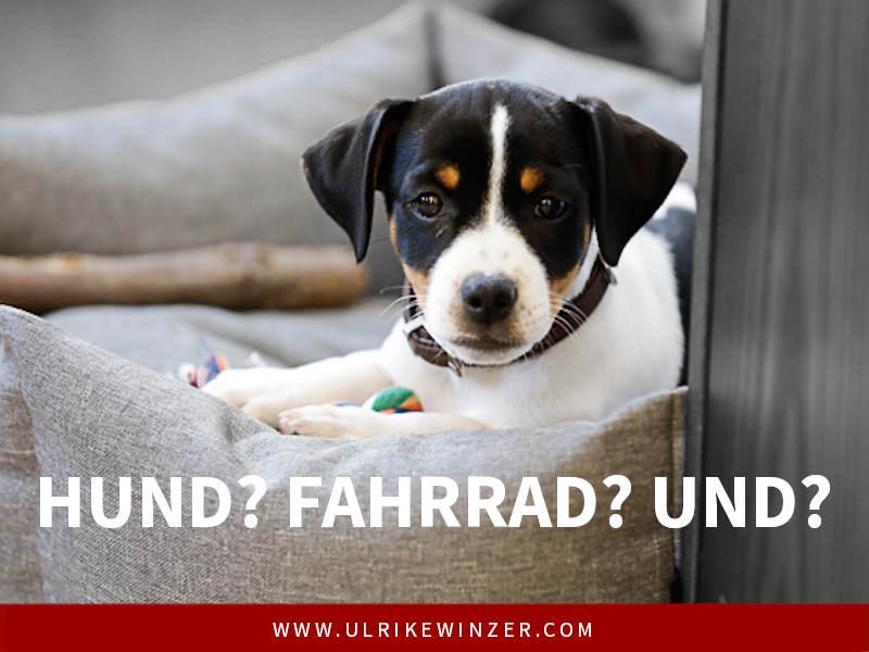 Hund im Büro Ulrike Winzer