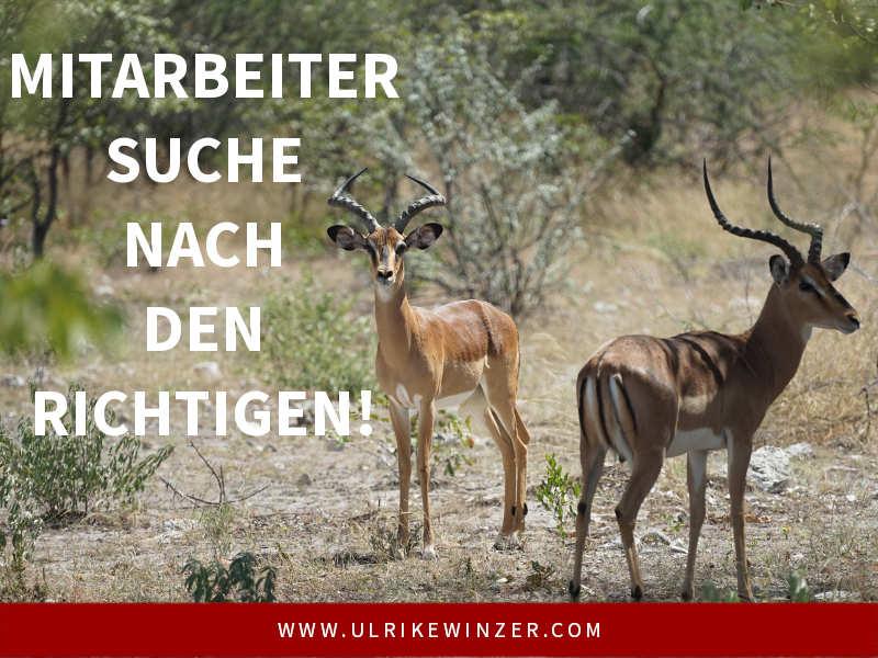 Mitarbeitersuche leicht gemacht - Ulrike WINzer
